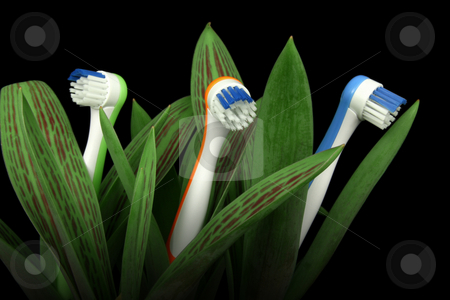 Natural care stock photo, Toothbrushes growing like flowers, over black, clipping path included by Tilo