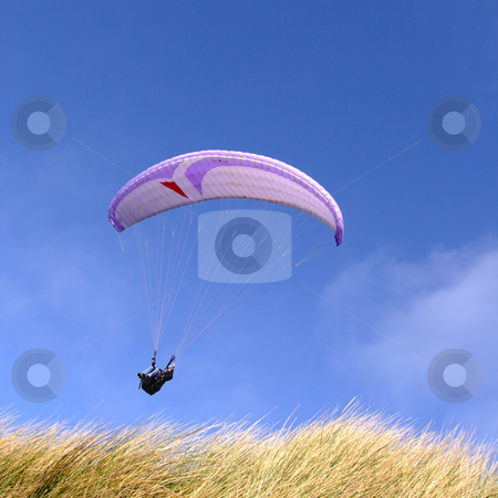 Purple paraglider stock photo, Purple paraglider passing over grass (vertical) by Tilo
