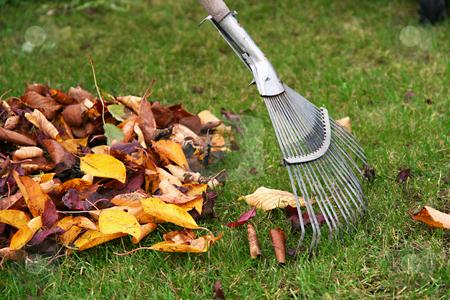 Raking the leaves stock photo, Raking autumn leaves, gardening during the holidays (horizontal) by Tilo