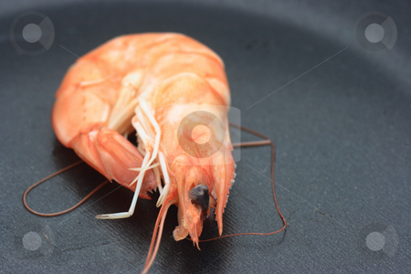 Shrimp on a pan stock photo, Close-up of lonely shrimp on a black pan by Natalia Macheda