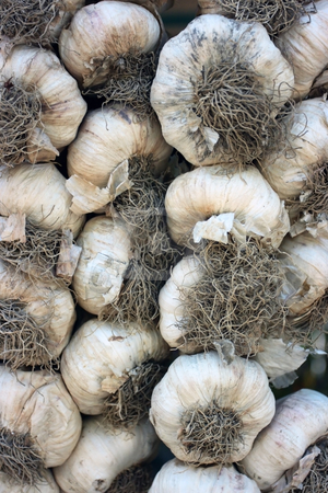 Garlic stock photo, Fresh garlic in plaits on peasant market by Natalia Macheda