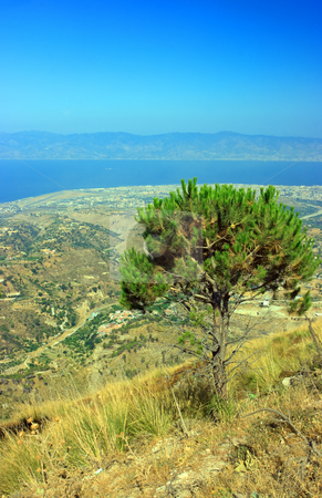 Pine of Aspromonte stock photo, Lonely pine-tree with Messina strait on the foreground by Natalia Macheda