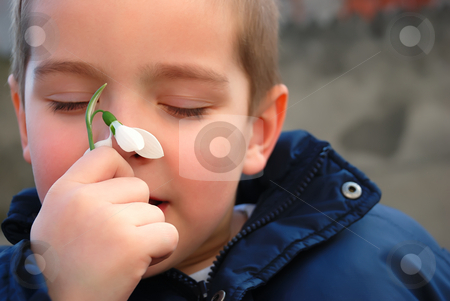 Boy and a snowdrop stock photo, A boy is enjoying the smell of a snowdrop by Ivan Paunovic