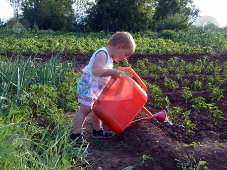 Boy watering stock photo, A boy is watering sweet pepper in a garden by Ivan Paunovic