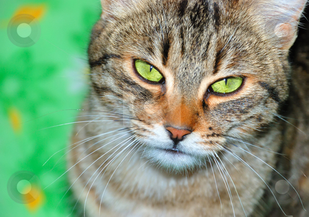 Cat stock photo, A cat is sitting on a green blanket by Ivan Paunovic