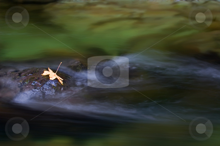 Dark Waters stock photo, Dark waters and a deep canyon yest light managed to illuminates the lone maple leaf on a rock amidst the flow creek. by Mike Dawson