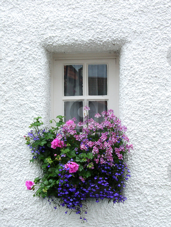 Tiny Scottish window stock photo, Tiny Scottish window with flowers by Juliet Photography