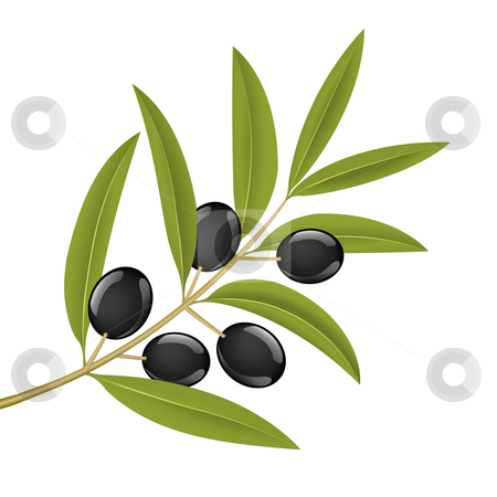 Olive branch stock vector clipart, Black olives on branch, detailed vector illustration by Tilo