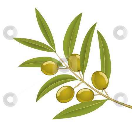 Olive branch stock vector clipart, Green olives on branch, detailed vector illustration by Tilo