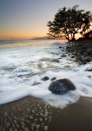 Sand & Sea stock photo, A lone tree surrounded by the rising tide along the coast of Maui near Lahaina by Mike Dawson
