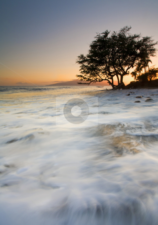Enveloped by the Sea stock photo, A lone tree along the coast of Maui, Hawaii near Lahaina. A series of waves to seems to completely surround the tree and envelope the surrounding shore in spray and foam. The island of Lanai hides under the setting sun. by Mike Dawson