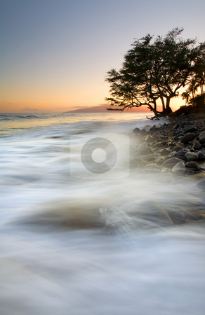 Seashore with tree stock photo, A lone tree anchors the coast and braces for the impact of another wave of the incoming tide crashing ashore at sunset near Lahaina on Maui. by Mike Dawson