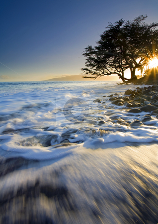 Swept out to Sea stock photo, A lone tree on the South coast of Maui near Lahaina seems to be in danger of being swept out to sea by the ebbing tides at sunset. by Mike Dawson
