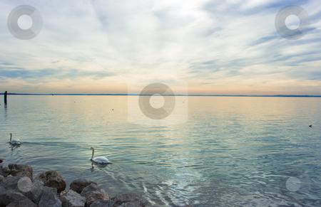 Swan lake stock photo, Dramatic sunset over lake Garda with floating swans by Natalia Macheda