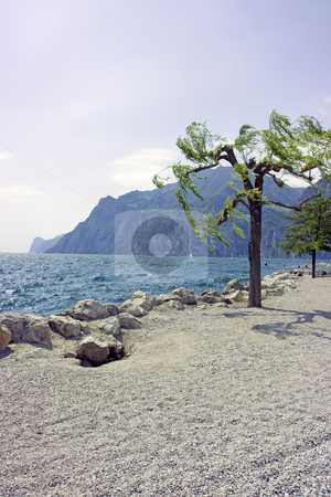 Tree on rocky beach stock photo, Tree against mountain on rocky beach of Garda lake by Natalia Macheda