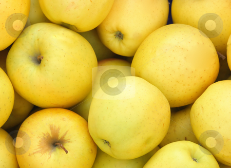Yellow apples on market stock photo, Heap of fresh yellow apples on peasant market by Natalia Macheda