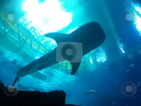 Shark stock photo, Shark by David Robinson