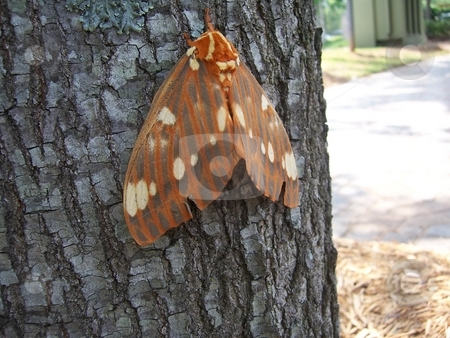 Moth/ Butterfly  stock photo, A great shot of a Moth/ Butterfly. Taken in Atlanta. Thanks by David Robinson