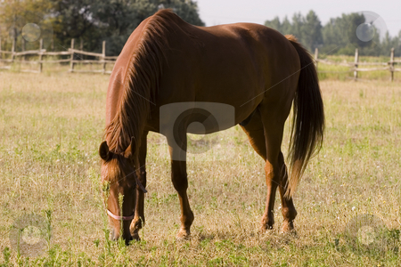 Horse stock photo, Brown horse by Fesus Robert