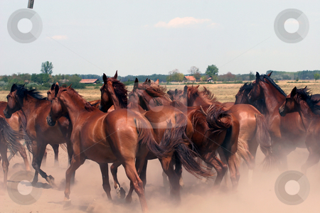 Horse Run stock photo, Horse Run by Fesus Robert