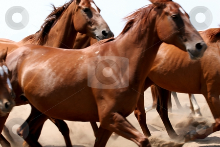Horse stock photo, Horse by Fesus Robert