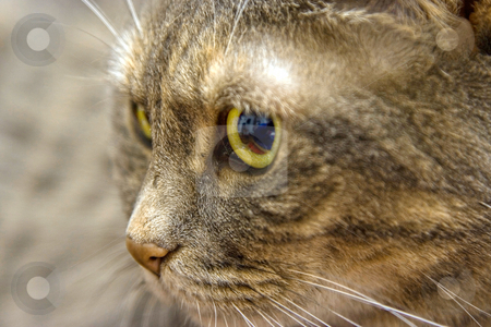 Cat's eye stock photo, Close up of a cat's green eye by Paul Hakimata