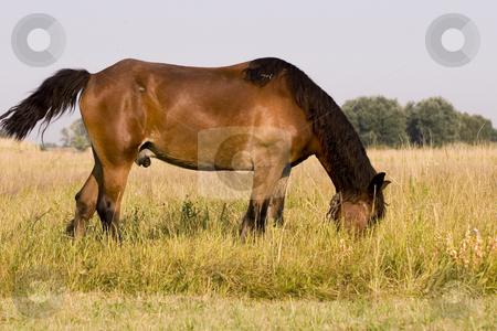 Horse stock photo, Horse by Fesus Robert