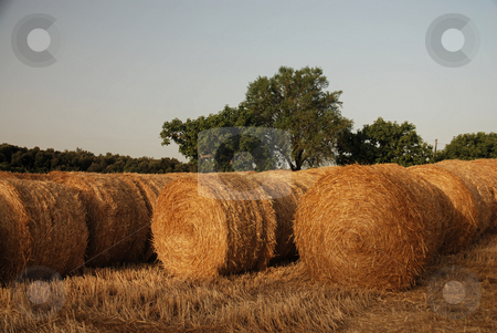 Hay in Catalonia stock photo,  by Gady Cojocaru