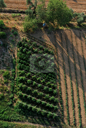 Agriculture in Catalonia stock photo, Picture taken form a hot air balloon by Gady Cojocaru
