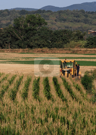 Harvesting in Catalonia stock photo,  by Gady Cojocaru