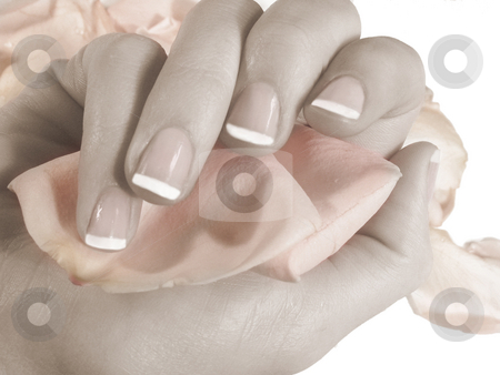 Nails and petals stock photo, French manicured nails holding rose petals by Anita Peppers