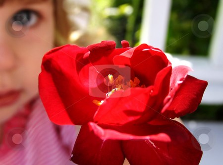 Flower for you stock photo, Little girl holding a rose with face blurred in background by Anita Peppers