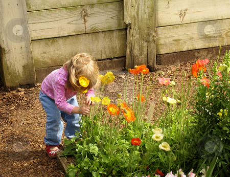 Little girl smelling flowers stock photo, Little girl picking and smelling flowers by Anita Peppers