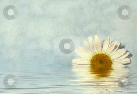 Daisy background stock photo, Daisy on blue textured background by Anita Peppers