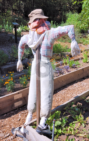 Scarecrow stock photo, Scarecrow in a Garden Shown from Behind by Denis Radovanovic