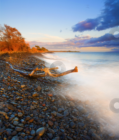 Facing the Waves stock photo, A fallen log or limb lies in the path of the incoming waves along this cobblestone beach near Lahaina on the island of Maui, Hawaii by Mike Dawson