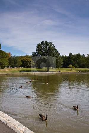Goose Lake stock photo, Landscape at local park by Seph Daradar