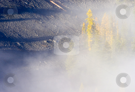 Shadows of the Forest stock photo, Long shadows from taller trees seem to dwarf the fir and larch trees partially hidden in the rising fog. by Mike Dawson
