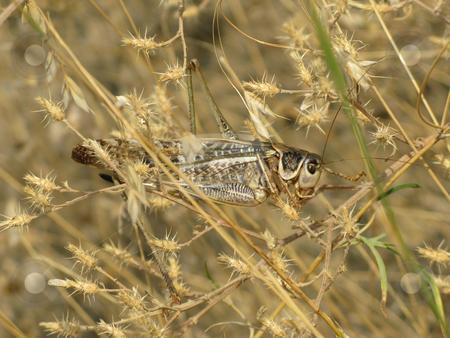 Grasshopper stock photo, Grasshopper and plant by Roman Vintonyak