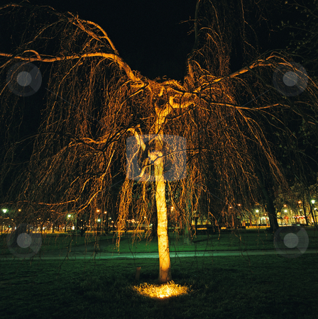 MPIXIS637023 stock photo, Tree in a city park at night by Mpixis World