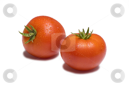 Tomato on White Background stock photo, Two vibrant tomatoes on white background glistening with water by Mike Dykstra