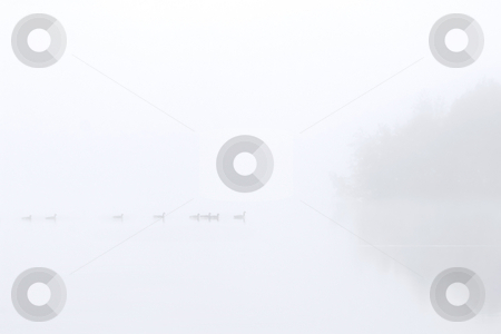 Out of the Fog stock photo, A small flock of Canadian Geese emerge out of the morning fog on Clear Lake. by Mike Dawson