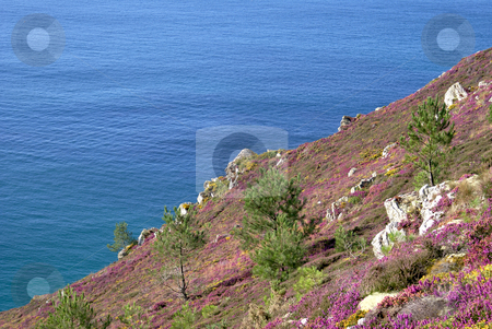 Landscape from Brittany stock photo, Landscape from Brittany : colored vegetation located at