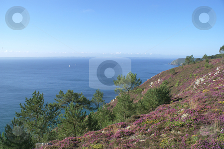 Pin trees stock photo, Landscape from Brittany : colored vegetation located at