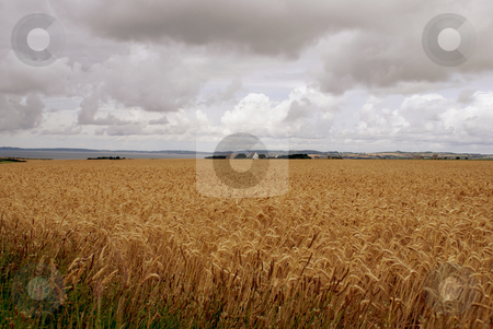 Agriculture stock photo, Landscape from Brittany by Serge VILLA