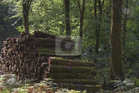 In the woods stock photo, Landscape from Brittany; in the forest by Serge VILLA