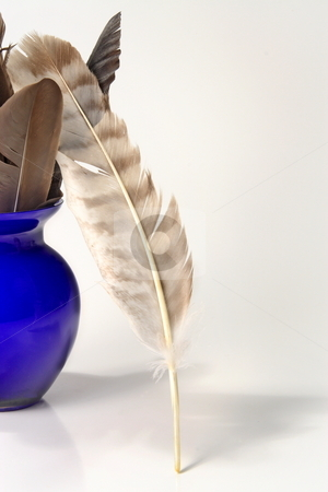 Feathers stock photo, Crow and hawk feathers in small blue vase by Jack Schiffer
