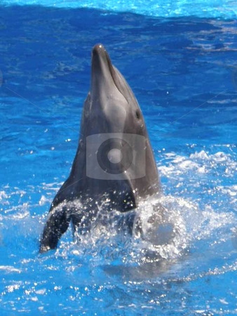 Dolphin stock photo,  by Ritu Jethani