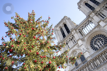 Notre Dame at christmas stock photo, Notre Dame at christmas with a christmas tree by Heiko Riemann