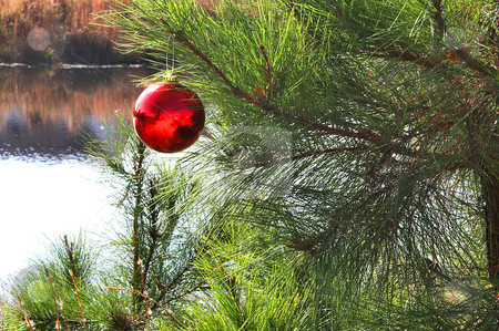 Christmas Ornament stock photo, A Christmas Ornament on a Chistmas tree. by Robert Byron